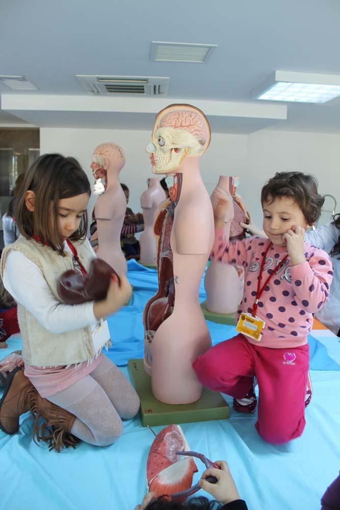 http://content.bahcesehir.edu.tr/bau,anaokul, çocuk, eğitim, anatomi